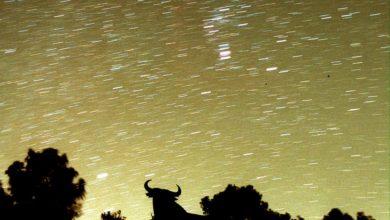 Photo of Stelle cadenti di novembre, ecco come vedere le Leonidi