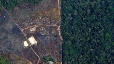 Photo of Allarme Amazzonia: mai disboscamento così rapido.