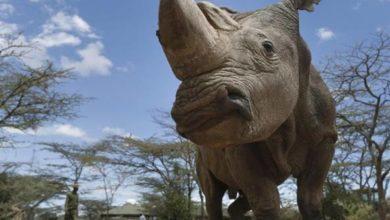 Photo of Animali in via di estinzione: tante le specie a rischio.