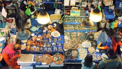 Photo of Il mercato dei prodotti ittici: verso la sostenibilità.