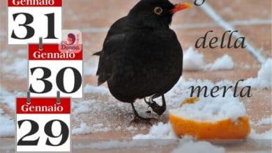 Photo of METEO: GIORNI DELLA MERLA di nuovo con il MALTEMPO, ultime novità.