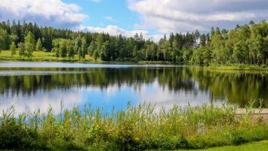 Photo of Oggi parliamo di ambiente naturale o biologico