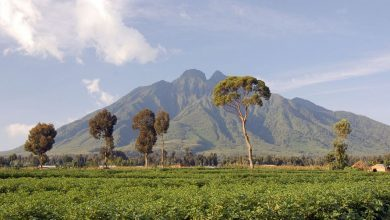 Photo of Raccontiamo il Parco dei Virunga, dove sono morti Luca Attanasio, Vittorio Iacovacci e Mustapha Milambo
