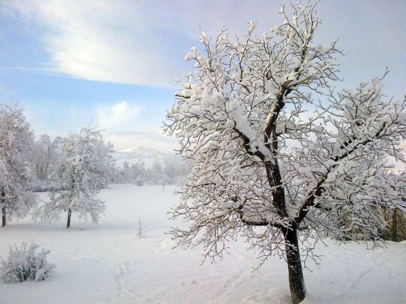 Meteo, intense nevicate sulle Alpi