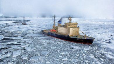 Photo of Vite da studiare in un fondale della calotta glaciale artica
