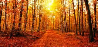 Luoghi bellissimi da visitare in autunno per volare con l'immaginazione |  Ohga!