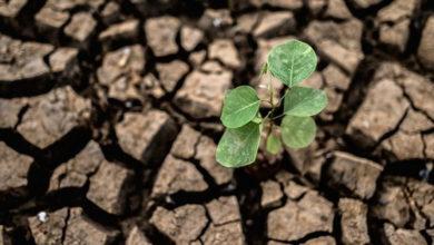 Photo of Il cambiamento climatico distrugge l'economia del Made in Italy